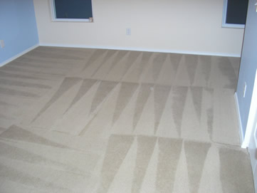 carpet%20cleaning%20Columbia%20SC